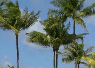 cheap bahamas resorts hotel deals bahamas oceanfront resort sale bahamas spa resorts