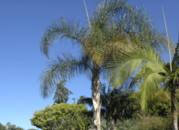 Aquatica San Diego waterpark savings discounted tickets California