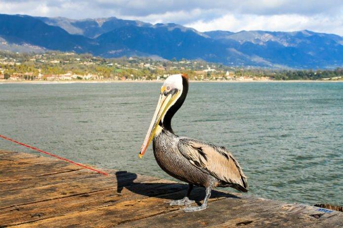 Win free trip to Southern California beach cotaage