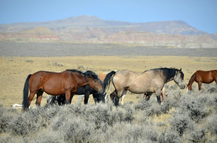 Cody Wyoming trip sweepstakes Win free hotel airfare car rental