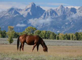 Hideout Lodge Ranch in Shell Wyoming Discount Save on Vacation Near Yellowstone