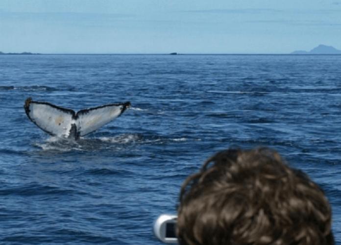 Juneau Alaska whale watching tour savings deal