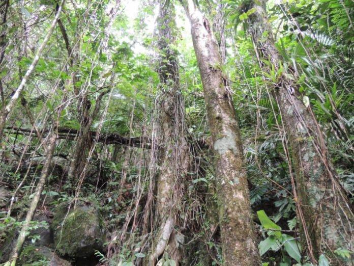 Puerto Rico vacation savings ziplining activity deal near San Juan