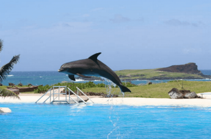 Discounted package deals to Sea Life Park Hawaii luau Pearl Harbor , Diamond Head State Monument