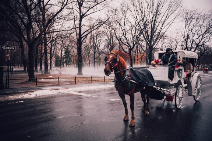 Promo code for 10% discount on Central Park horse-drawn carriage ride