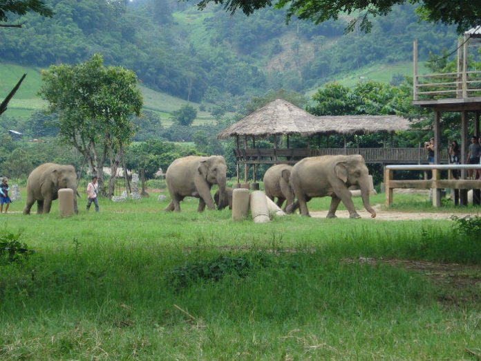 Win Thailand trip Elephant Nature Park bike free vacation