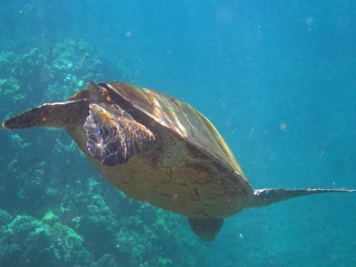 Discount price for snorkeling in Molokini crater Turtle Arches Hawaii Maui vacation savings