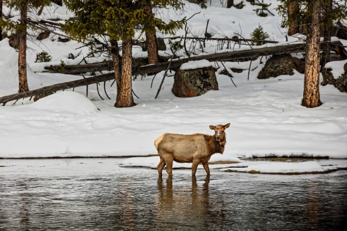 Rustic Inn Creekside Resort & Spa Wyoming discounted nightly rates