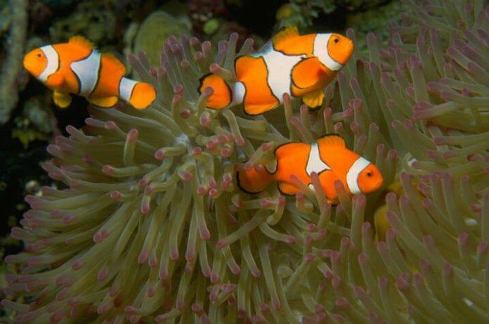 Save money at aquarium in Mall of America in Minneapolis