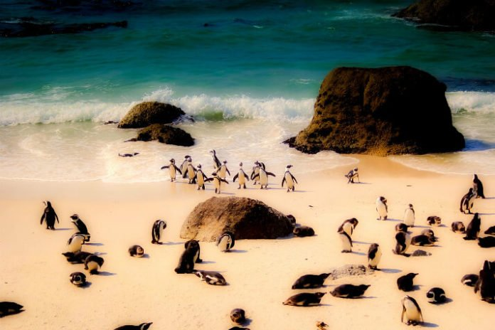 South Africa vacation sweepstakes lodging airfare safari day trip to penguin colony