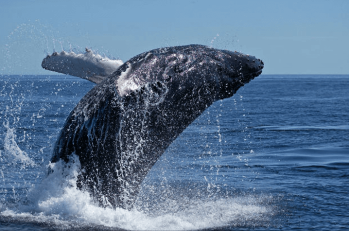 Discount on whale & dolphin spotting tour North Island St. Lucia