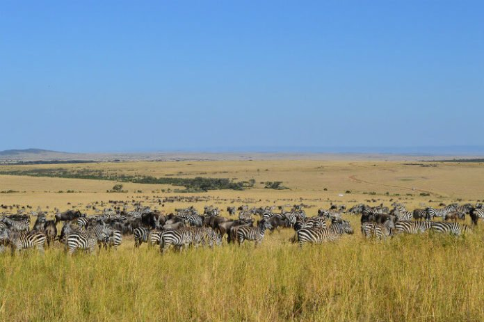 Win free trip to Kenya roundtrip airfare from NYC see animals on reserves