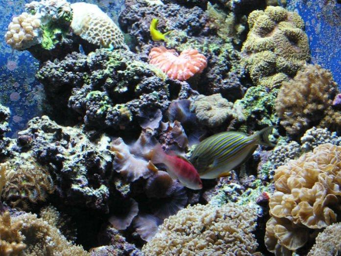 Over half off Shedd Aquarium, Field Museum, 360 Chicago