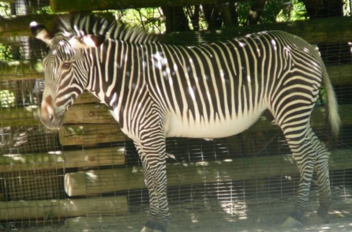 Discounted adventure tickets to Cincinnati Zoo