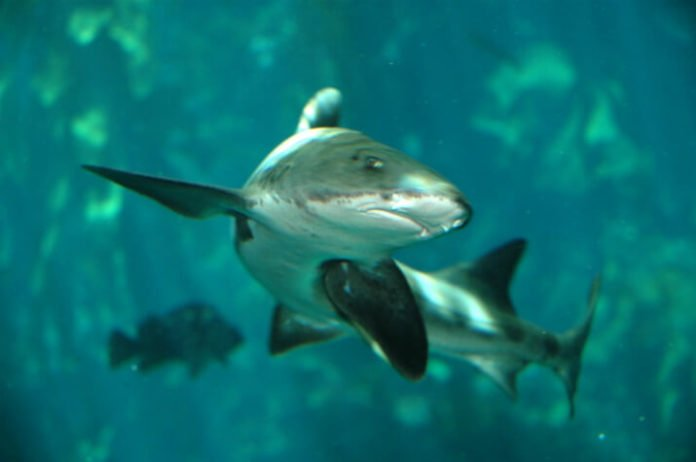 Save money at Comfort Inn Monterey with vacation packages free tickets to Monterey Bay Aquarium