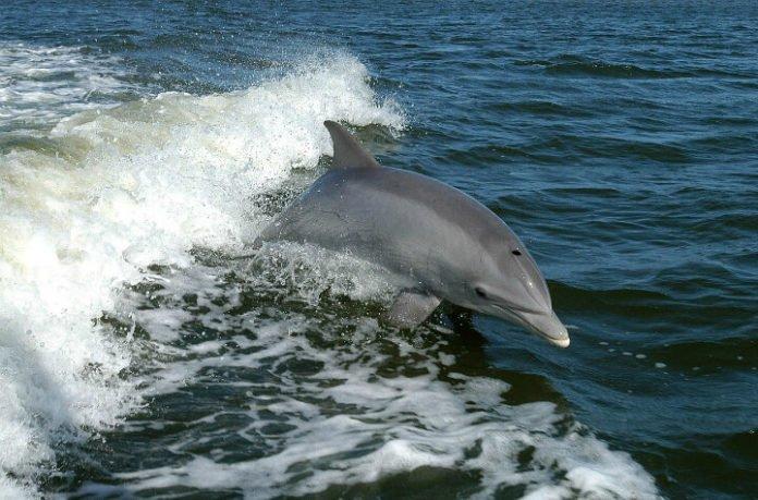 50% off Australian reptile park dolphin cruise Nelson Bay sandboarding Stockton Bight Sand Dunes tour