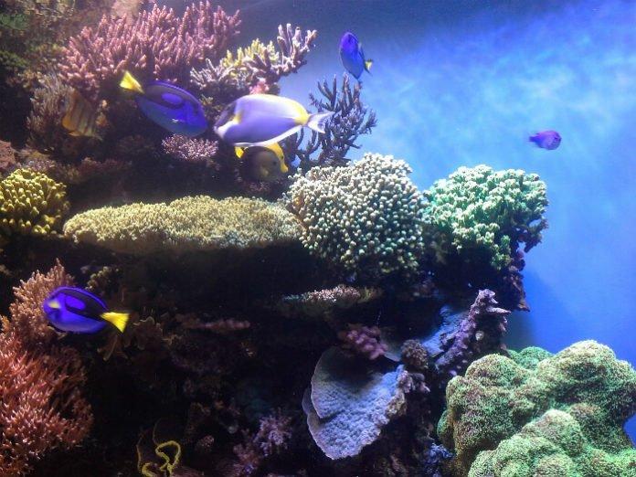 Hilton Garden Inn Monterey Bay Aquarium Package Deal