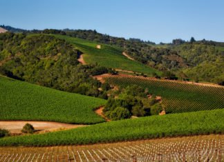Napa Valley sweepstakes win airfare to San Francisco hotel spending money car rental cooking lessons