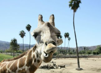 San Diego Zoo Old Town Trolley Package Deal Promo Code