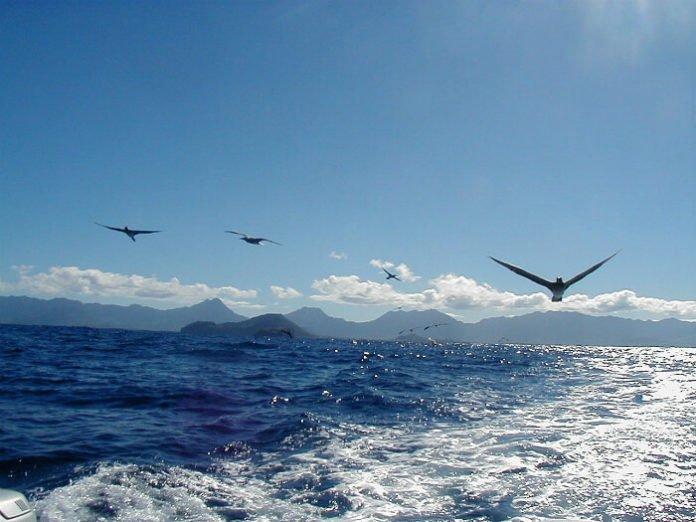 Hawaiian cruise deals from LA & Vancouver see honolulu pago pago bora bora tahiti