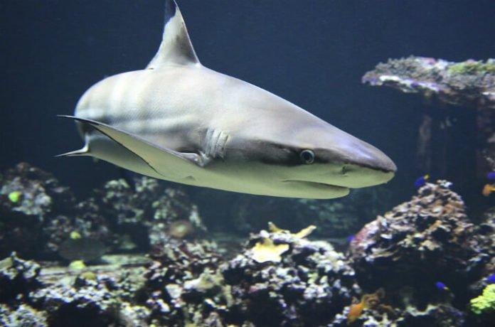Promo code for discounted adult & children's tickets to Newport Aquarium Cincinnati