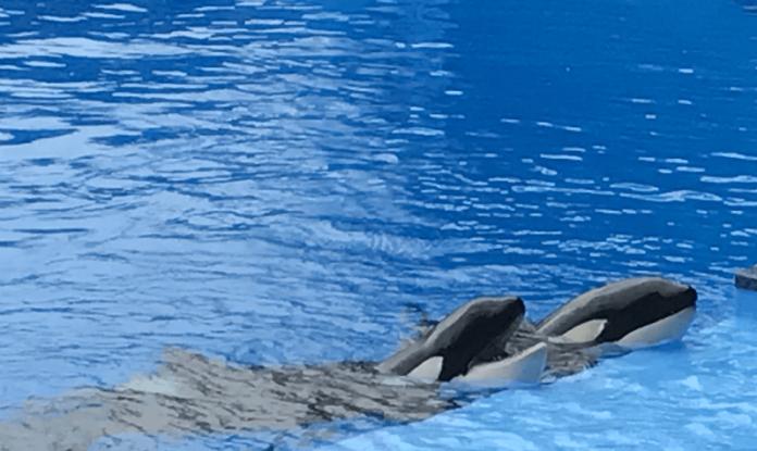 Half off SeaWorld San Antonio Texas Animal Encounters see dolphins, whales, sea lions up close