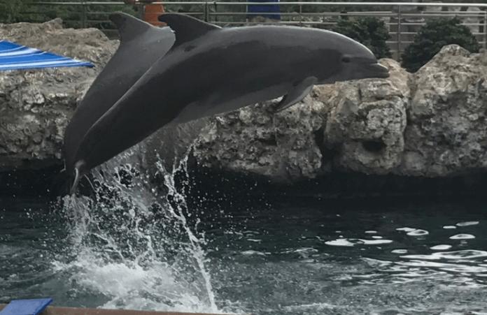 25% off SeaWorld San Antonio Aquatica 2-park pass under $100