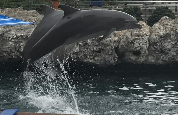 25 Off Seaworld Aquatica San Antonio Annual Pass Green Vacation Deals