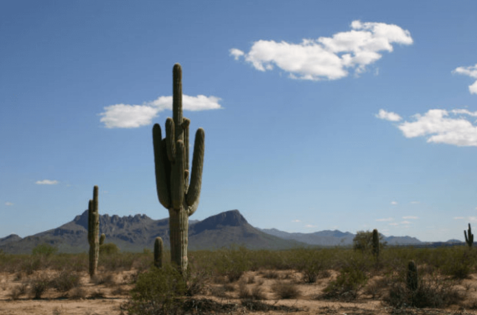 Cheap Tickets Available For Arizona Bowl Green Vacation Deals