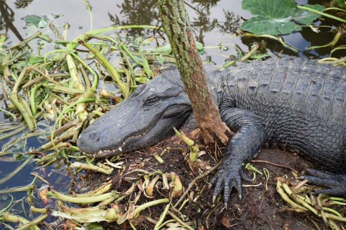 Gatorland Orlando Florida theme park & wildlife preserve discounted price savings