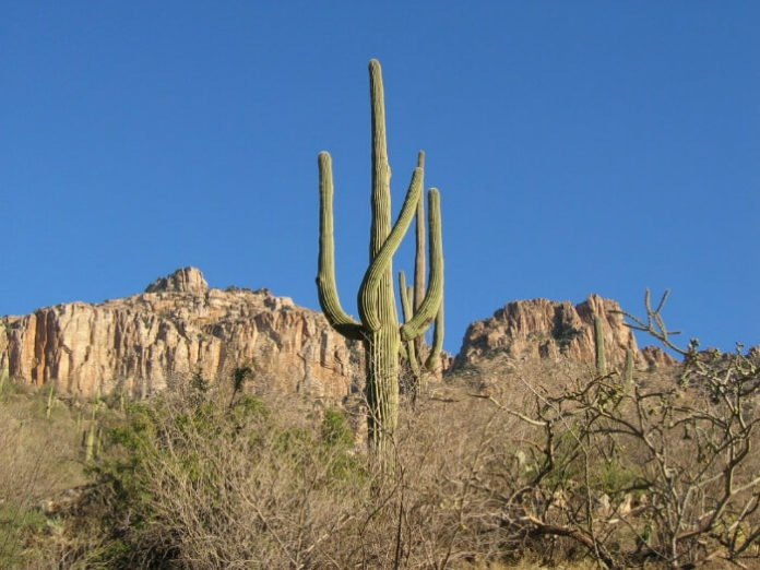 Hampton Inn Tuscon Sabino Canyon tram tour package deal savings