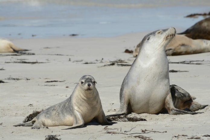 Discounted price for Kangaroo Island Explorer trip with Adventure Tours Australia