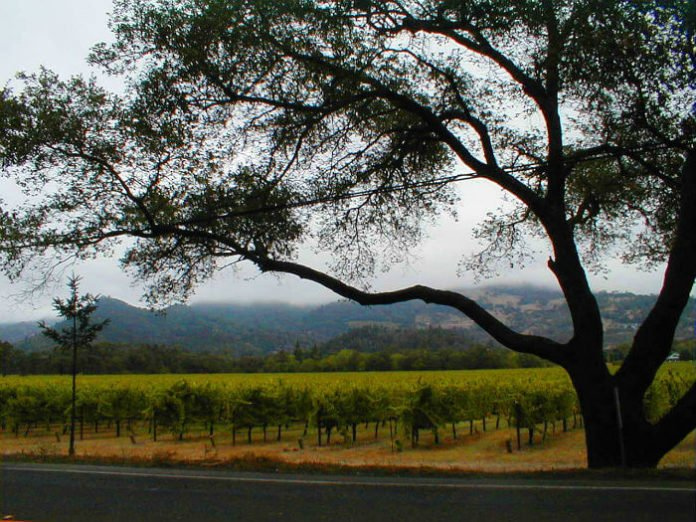Win money towards travelling to Napa Valley private vineyard tour & wine tasting cooking class