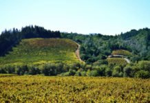 Win Expedia credit for transportation to Sonoma County California, B&B stay, tour & wine tasting
