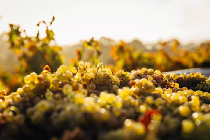 Discounted price for Barossa Valley Australia vineyards & Hahndorf tour