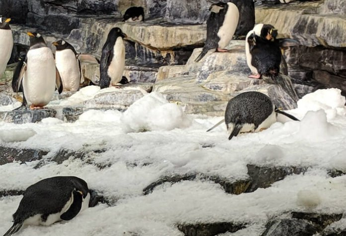 SeaWorld San Antonio Texas & Aquatica theme park ticket deal