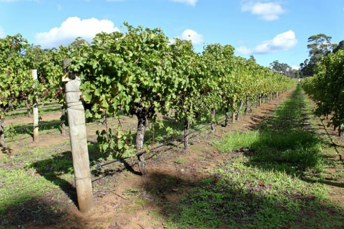 Margaret River Wine Tour winery Perth Australia