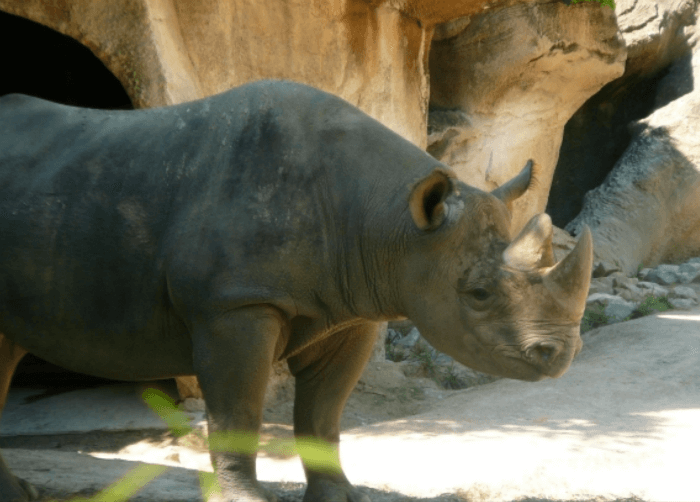 5 Reasons To Love Cincinnati Zoo S Easter Celebration