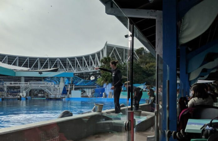 Dine with Shamu at SeaWorld Orlando tips & highlights