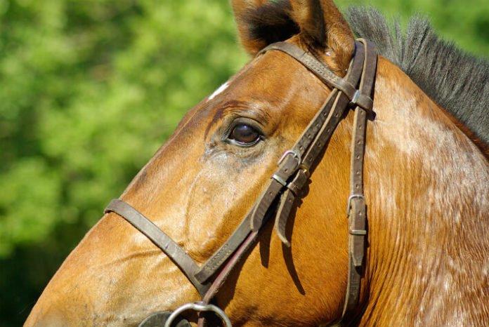 Discount price for horseback riding in Savannah Georgia