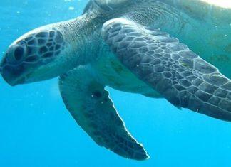 SEA LIFE Aquarium & LEGOLAND combo pass save money at Crown Center Kansas City MO