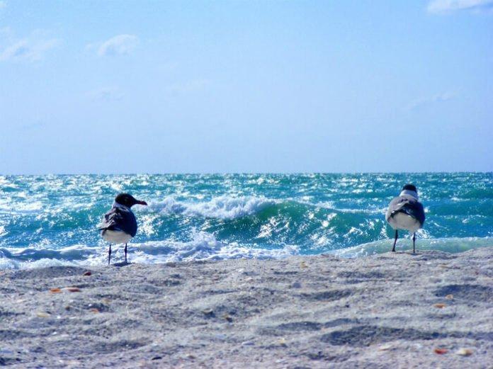 Sanibel Island Florida sweepstakes win free trip