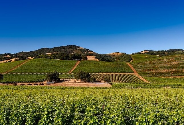 Win trip to wine country in California flight to San Francisco or Oakland stay at Cottage at Wente Vineyards