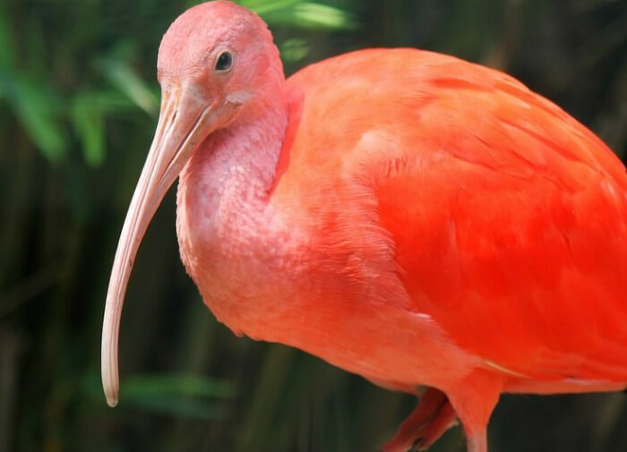 Save On Fun In The Tropics At The Franklin Park Zoo In Boston Green Vacation Deals