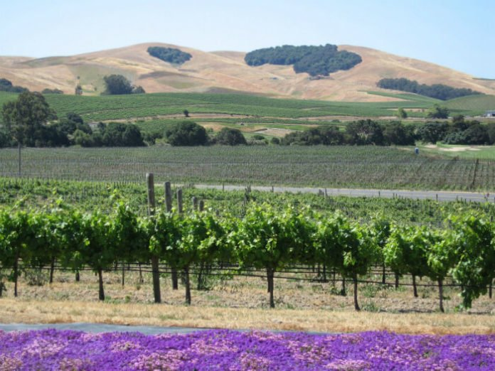 Culinary Institute of America cooking boot camp & trip to Napa Valley sweepstakes