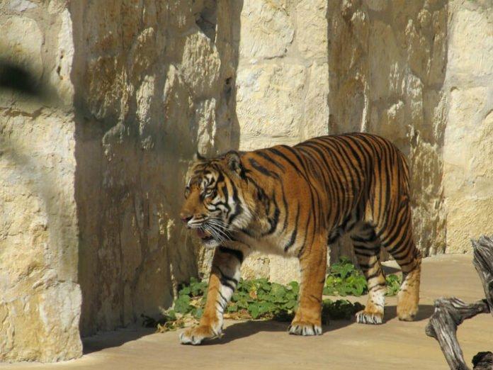 10 things to do in San Antonio Texas during Final Four zoo aquarium SeaWorld ghost tour beer