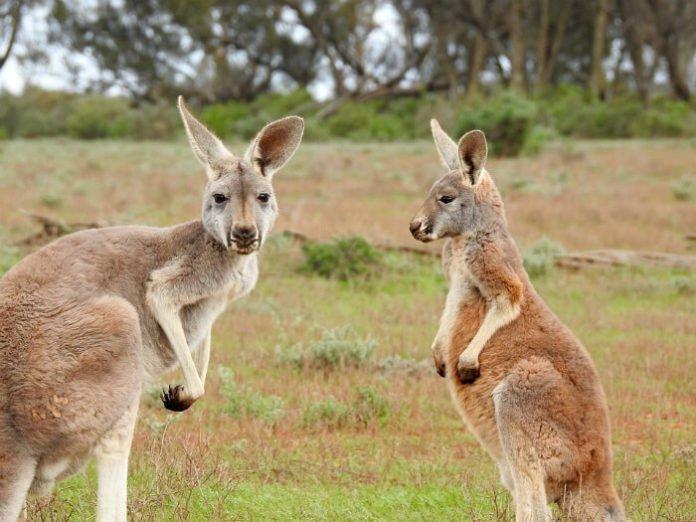 Win a trip to Australia travel sweepstakes
