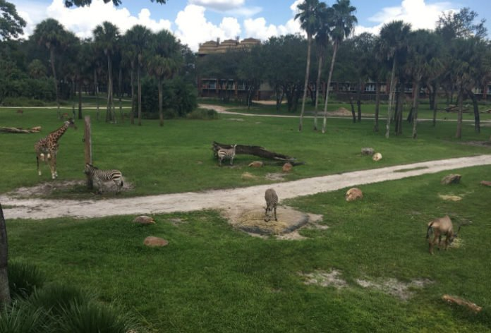 video tour of Disney's Kidani Village in Orlando Florida