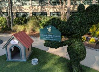 Mickey shrubbery outside Disney's Hilton Head Island Resort South Carolina
