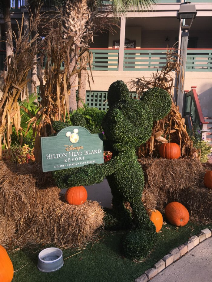 mickey mouse shaped bush with pumpkins and Disney's Hilton Head Island Resort sign